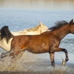 horses small